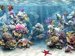 The Worldu0027s Best Photos of laut and pemandangan - Flickr Hive Mind