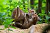 _J6A0748 (Franck Sebert) Tags: renard roux red fox goupil proximité forêt 5d mark iii 400mm 28 l is usm nature sauvage mammifère extérieur animal renardeaux 2017 mai ef 14x wildlife wild jeux playing