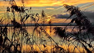 Marshland evening