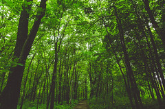 Forest Hiking Trail - Lake Louise State Park, Minnesota (Tony Webster) Tags: lakelouisestatepark leroy minnesota southernminnesota forest park statepark trees wideangle unitedstates us