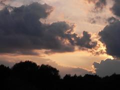 Evening Sky 2. Kalisz, Poland. Taken by WR (kachigarasu) Tags: wielkopolska ポーランド カリシュ ヴィエルコポルスカ sky 空 evening 夕方 風景 木 trees landscape tree kalisz 夕暮れ 日没 sunset 夕焼け シルエット silhouette eveningsky prosnavalley dolinarzekiprosny 見上げる poland forest 林 雲 cloud clouds