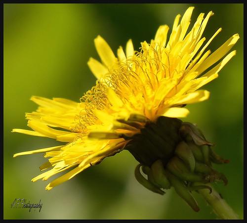 09.09.17 Sunshine..