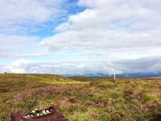 Scotland Bird Hunting 7