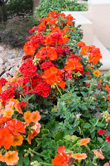 20170831-153551 (fritzmb) Tags: colorado coloradosprings event keyword northamerica place source sourcefritzmb usa building descriptor flower hotel nature plant public structure vacation