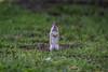 Sunny Hill Resort (Katherine Ridgley) Tags: ontario northernontario sunnyhillresort camping cottage madawaska madawaskavalley barklake wild wildlife chipmunk rodent animal