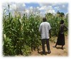 2017 Monitoring maize crop 1 (Foods Resource Bank) Tags: frb world renew humanitarian charity food security water conservation agriculture farmers vegetables crops maize raised bed garden mulching soil improvement cassave income protein animals disaster risk reduction drought flooding community training small business bricks
