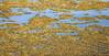 Aquatic Plants on Alkali Lake (wyojones) Tags: wyoming cody alkalilake aquaticplants halophyte salicorniarubra redglasswort swampfire sodium metal salts alkali basicsalts waterfowl habitat wetlands lake water vegetation wyojones