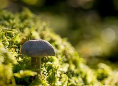 Svampskogen (Per Dahlgren) Tags: svamp mushroom forest autumn skog macro höst hallstahammar