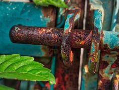 Rusted Hasp (MarkRosauer) Tags: rust macromondays hasp lock oxidation ironoxide iron chippedpaint leaf