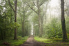 Ethereal (SASHA TURPIN) Tags: 5d 24105mm canon mist misty forest france fog landscape light trees tree path