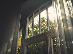 555 (Daniel Hammelstein) Tags: bonn fotostudio atelier herbst licht fenster altbau stimmungsvoll warmeslicht lumix gh5 20mm17 microfourthirds mirrorless systemkamera grain filmlook vintage
