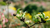 (VirtualWolf) Tags: animal australia bee bokeh canonef35mmf14lusm canoneos5dmarkiv flora insect kingspark perth techniques westernaustralia westernaustralianbotanicgarden wildlife flower