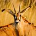 Ghoha Hills, Savuti, Botswana