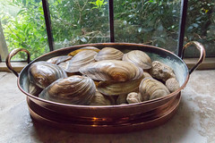 Copper bowl of shells (Carol Spurway) Tags: broughtoncastle broughton banbury oxford oxfordshire hha fiennes moat fortified manor house interior room hh historichouses