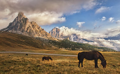 my dark horses (cherryspicks (on/off)) Tags: animal horse grass landscape mountain field valley sky clouds road hill dolomites europe