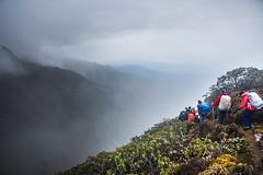 Gocha-la trek in Sikkim, India (David Ducoin) Tags: asia cloud dzongri gochala hike hiking himalaya india kangchenjunga mist mountain nationalpark nature sikkim trek treking trekking walking gangtok in