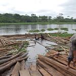 Logs on the riverbank thumbnail