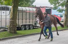 Wemmel, Jaarmarkt 2017 #3 (foto_morgana) Tags: animals belgique belgium belgië horse jaarmarkt2017 mammalia mammals mammifères nature outdoor säugetiere wemmel zoogdieren