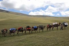 40. Ereen Khargai Valley To Delger Murun Valley, Turgen Mountains Trek, Mongolia (Jay Ramji's Travels) Tags: mongolia ereenkhargai delgermurun valley turgenmountains trek camels landscape scenery