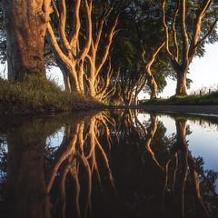 Ireland - The Dark Reflections (030mm-photography) Tags: rot irland ireland tghedarkhedges baum bäume wald forrest trees sonnenaufgang sunrise licht schatten light shadow alley allee kingsroad nordirland nord northireland landschaft landscape natur nature reise travel europe europa