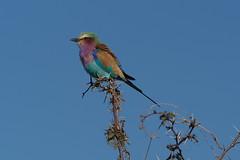 P7200160 (hugoholunder) Tags: südafrika botswana juli 2017 okowango delta national park makadikgadi
