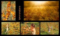 Sanddorn - ein vielseitiges Mulititalent (Mariandl48 (+2.000.000 views)) Tags: sanddorn collage kinder mutter frau sonnenstrahlen abendsonne sanddornplantage mädchen junge sommersgut