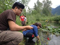 Doug and Nicole plant the experimental sites (BC Wildlife Federation's WEP) Tags: outreach public yellowflagiris bcwf education wep wetlandseducationprogram invasive species control research wetland bcwildlifefederation cheamlake cheam rosedale chilliwack