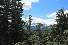 Mountain through the pines (Bella Lisa) Tags: mountrainiernationalpark sourdoughmountains washington sunrisevisitorcenter degepeak mtrainier emmonsvista curlyeverlasting wildflowers wilderness nationalpark washingtonstate sunsetpoint hiking emmonsglacierevergreens pines pinetrees