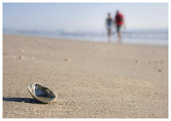 Todo pasa y todo queda. (Jill Bazeley) Tags: sea shell seashell beach atlantic ocean couple walk waves shore sand shoreline satellite florida usa brevard county space coast sony a6300 1670mm zeiss spain poetry