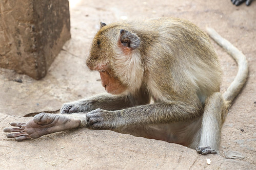 Wat Khao Takiap Monkeys