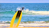 The fin end of the spin (geemuses) Tags: surfing surfer surf water sea ocean waves sport action sportsaction actionshot beach sand surfboard blue yellow wave acrobatics canon 6dmkii landscape manly manlybeach nsw australia