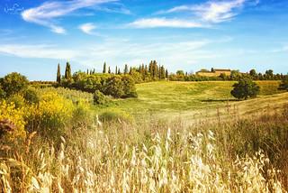 Tuscany landscape near San Gimignano