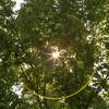 A Folium Eclipse (Jill Clardy) Tags: ca california northamerica redwoodcity solar usa eclipse moon sun leaf leaves branches tree filter sunflare folia folium 201708214b4a5145 explore explored