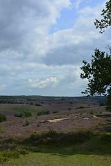 wolken en heide_D717714 (Vogelmelk) Tags: veluwe posbank heide nature natuur landscape landschap netherlands holland