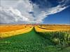 Butterfly corridor II (Katarina 2353) Tags: landscape fields summer serbiainspired agriculture katarina2353 katarinastefanovic