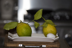 Who says organic lemons don't grow to be giant ? (Zara Calista) Tags: lemons california organic giant extra large kitchen plate life two couple pair still fruit citrus