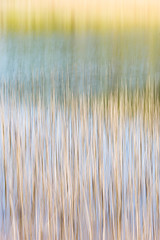 REEDS, WEEDS, AND WATER (Deborah Hughes Photography) Tags: intentionalcameramovement icm abstractnature abstractphotography abstracts incameraeffects impressionism impressionistphotography art artisticphotography