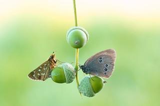 Morning butterflies...