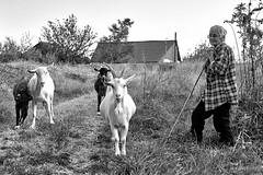 shepherdess and four goats (uiriidolgalev) Tags: shepherdess four goats