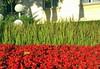 IMG_2731-001 (bpetzev) Tags: bulgaria българия цветя враца vratsa