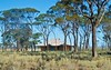 (mblaeck) Tags: house tree australian outback landscape aussie australianlandscape australianscenery