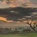 Eden Valley mists (mattwalkerncl) Tags: canon eos 6d lee benro landscape lakedistrict eden valley cumbria morning sunrise colour cloud movement