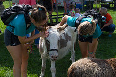2017 New Student Move In Day-14.jpg (Gustavus Adolphus College) Tags: football gamegame homecoming game pc kylee brimsek petting zoo 20170923 animals outdoor outside students homecomingfootballgame pckyleebrimsek pettingzoo