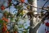 Rancho Santa Fe Hummer (SoCal Mark) Tags: hum hummingbird hummer california ca san diego 2017 bird nature wing wings feather