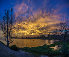 Peace (PhotonLab) Tags: wetlands oaktree oak ocean beach lowlight sony a7 huntington 714 1503 ca cali socal outdoor sky tree plant bolsa chica sunset sun clouds cloudscape landscape water pano panoramic panorama zeisslens zeissbatis carlzeiss
