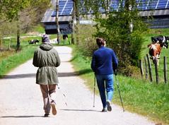 _mit schwung ins wochenende (SpitMcGee) Tags: hff happyfencefriday walk gehen damen ladys fence zäune kühe cows landschaft landscape spitmcgee explore 112