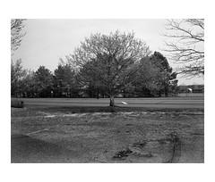 Tree(s) at an outlet mall (Richard C. Johnson: AKA fishwrapcomix) Tags: mamiya645pro mamiyasekor45mmf28 film ilfordxp2400 analog analogue scanfromnegative blackandwhite bw monochrome filmisnotdead ishootfilm istillshootfilm landscape cloudy thelandunloved landscapeofdecline outdoor economicdownturn thegreatrecession sunsetsinthewest civisromanussum spqr trees text sign weeds grass fence northbranch minnesota makeamericagrateagain icamesofarforbeauty sictransitgloriamundi