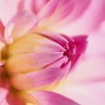 Blüte thumbnail