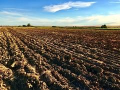 Plowed field, Vulci, Italy. (Massimo Virgilio - Metapolitica) Tags: vulci sun sky field summer landscapes landscape italy parcodivulci