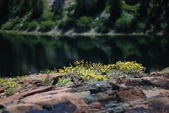 (Britt Decker 2) Tags: lake blanche utah mountains flowers reflection green yellow sooc nature